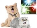 Petárda, kutya, szilveszter2