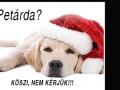 Petárda, kutya, szilveszter6